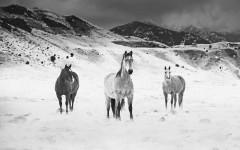 Montna_Horse_03__880
