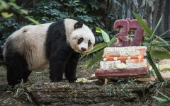 worlds-olderst-panda-celebrates-37th-birthday-raw__880