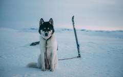 Akiak-the-adventure-dog-__880